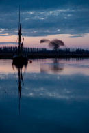 Suffolk Starlings