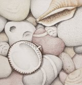 Pebbles, Cockle and Spiral Shells
