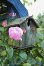 Rose and Bird House