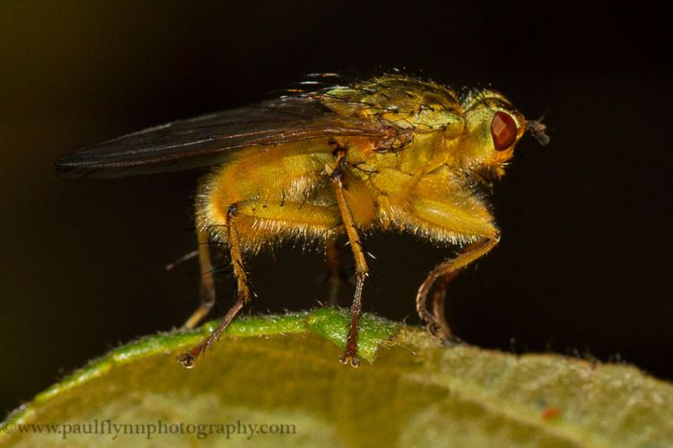 Insects-2015 0922