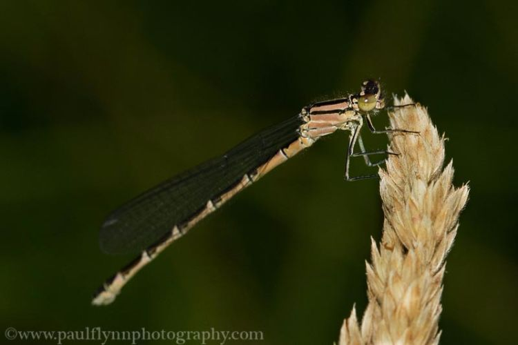 Insects-2015 2984
