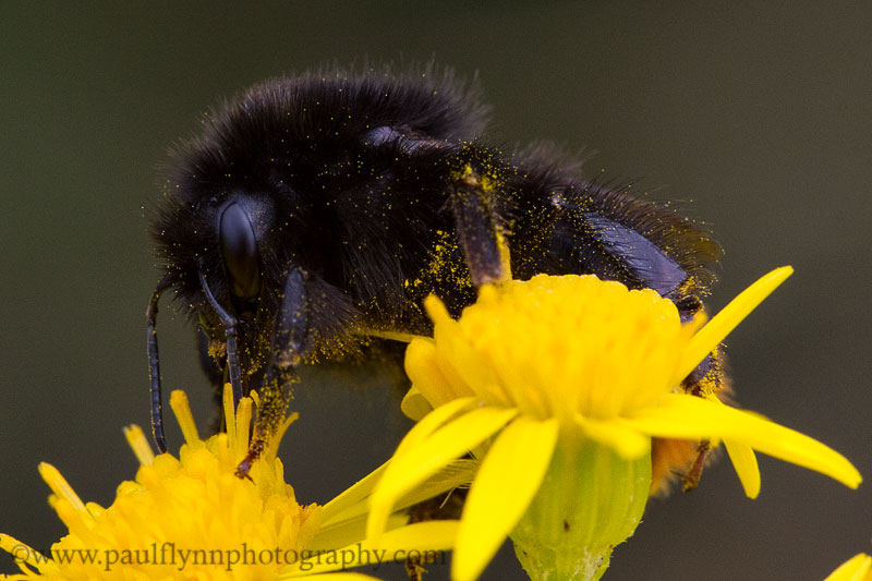 Nectar Hunting