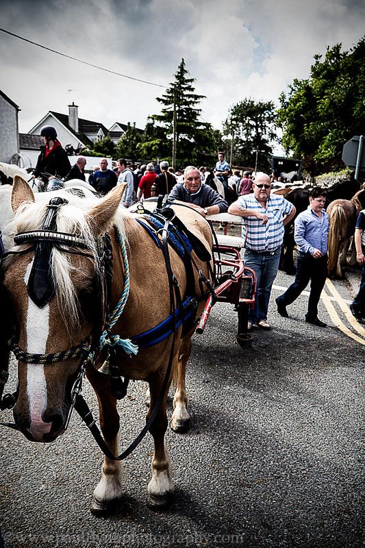 Tallow-Horse-Fair-2014 0376