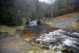 Hamsterley Forest Ford 3