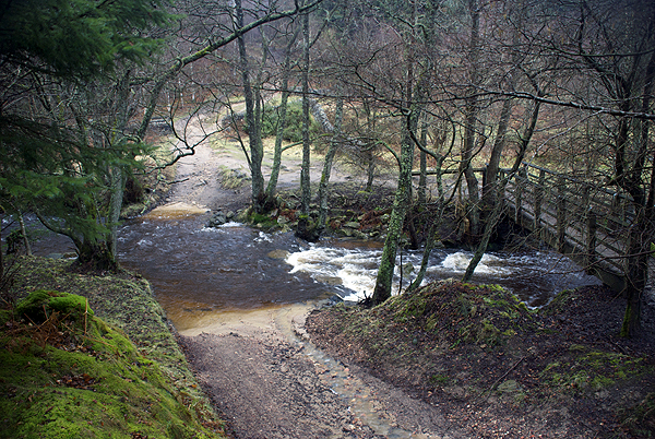 Hamsterley Forest Ford 4