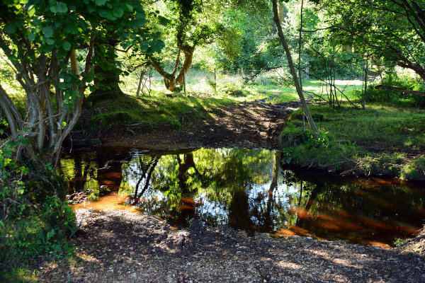 Gorley Common Ford 1