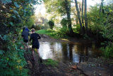 Shere Ford 2