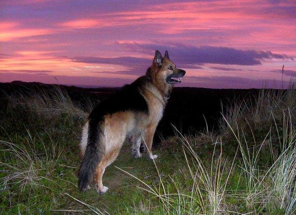 Dawning on the dog