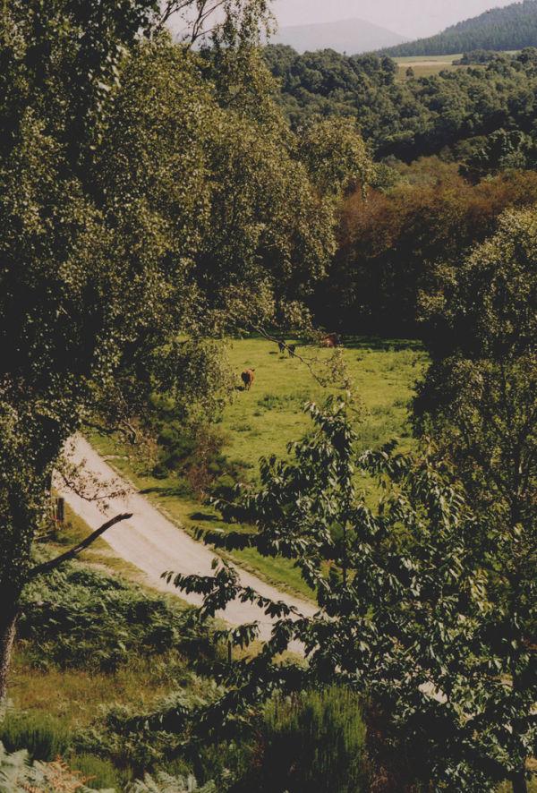 Speyside greenery