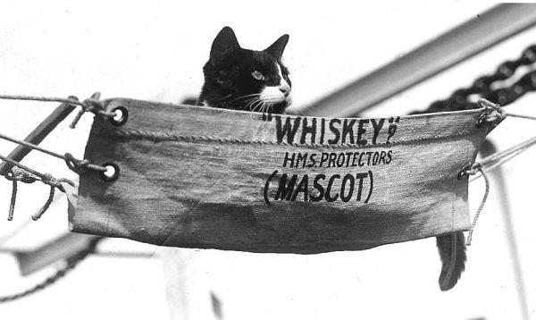 Whiskey in mini-hammock on HMS Protector