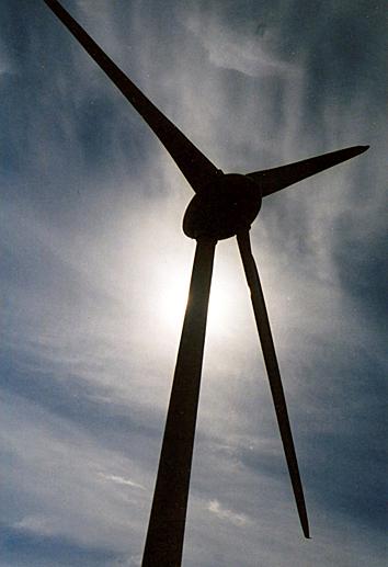 Windfarm, Skelmonae