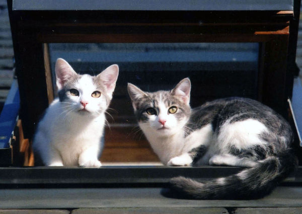 Kittens on a hot slate roof