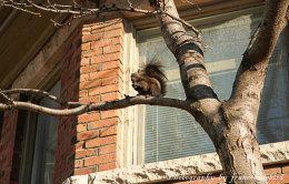 Squirrel  near Toronto Canada