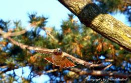 ~WILDLIFE Photography~