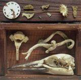 Bird Skull
