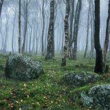 Early morning mist, Millstone Edge