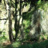 Birch Trunk and Rockface, Lawrence Field