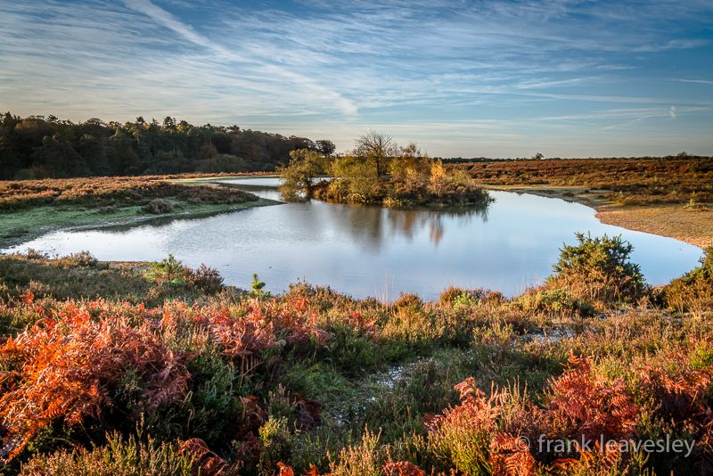 Autumnal Island