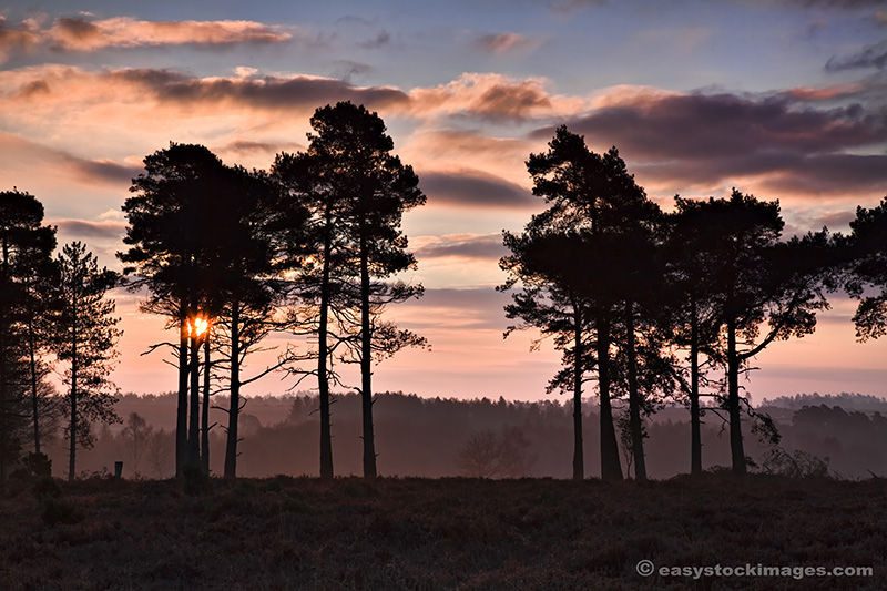 February Sunrise In The New Forest