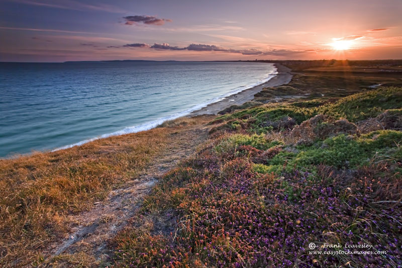 Heather On Hengistbury Head