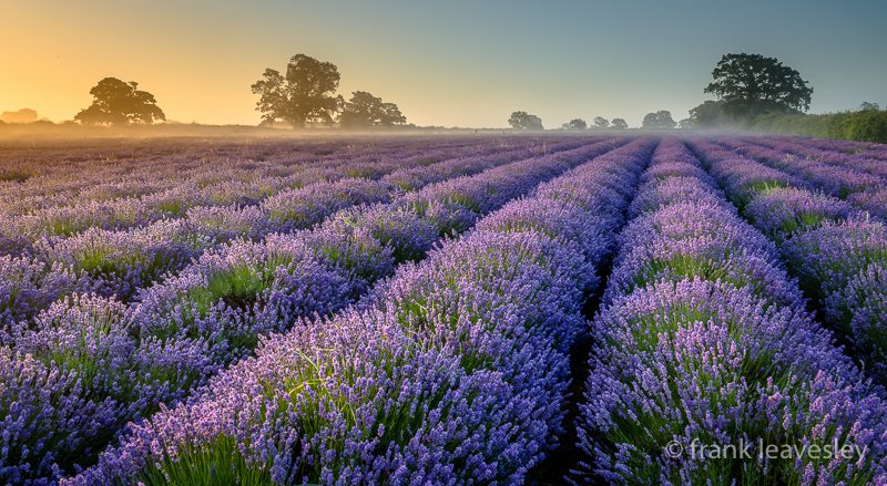 Lavender Misty Touch