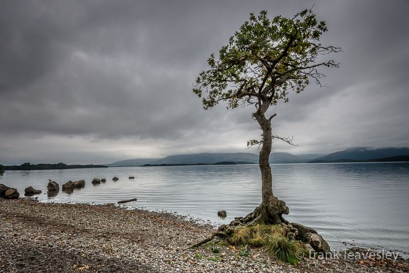 Lonely By The Loch