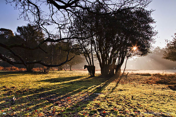 New Day New Forest