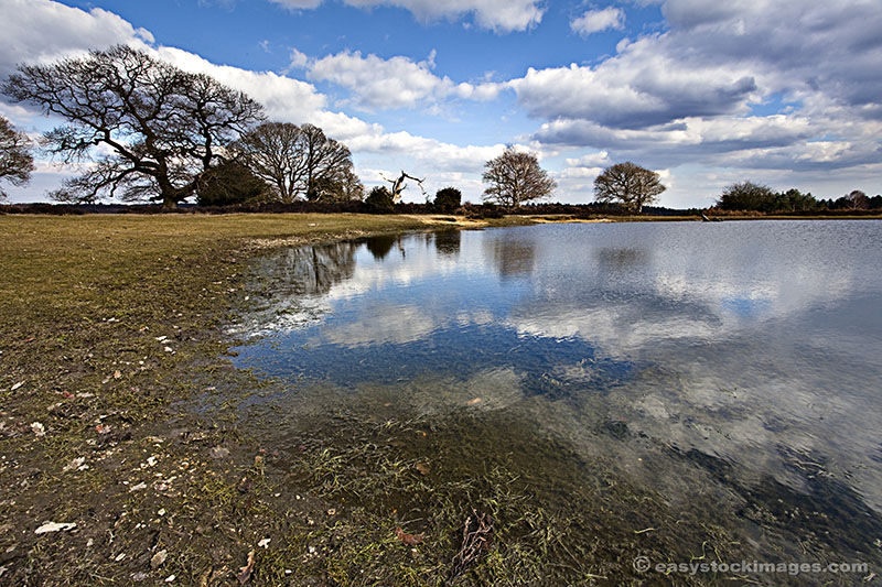 New Forest Reflections