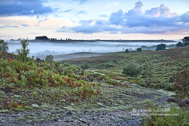New Forest Summer Mist
