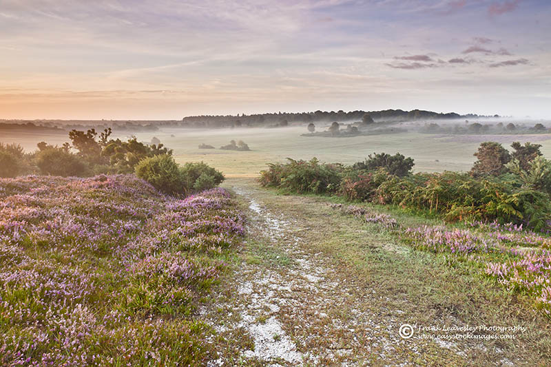 New Forest Summer Mist