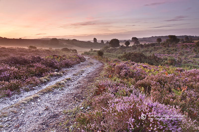 New Forest Summer Sunrise
