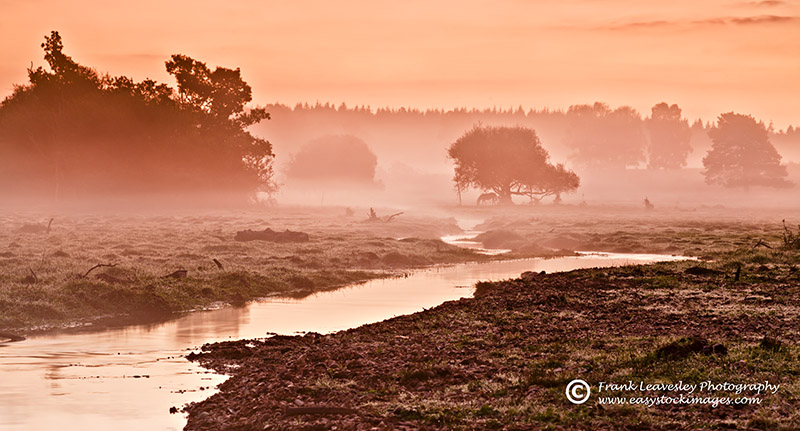October Dawn New Forest