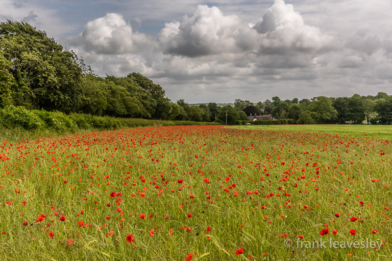 Poppies At Chettle