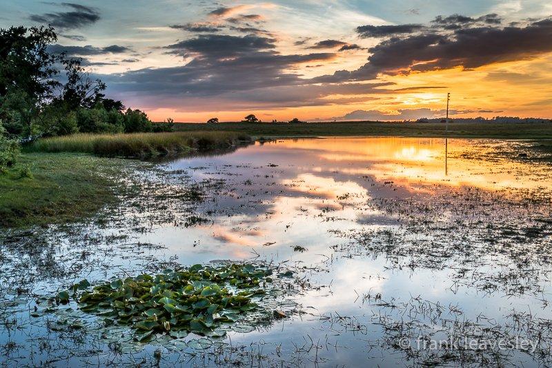 Sundown Burley