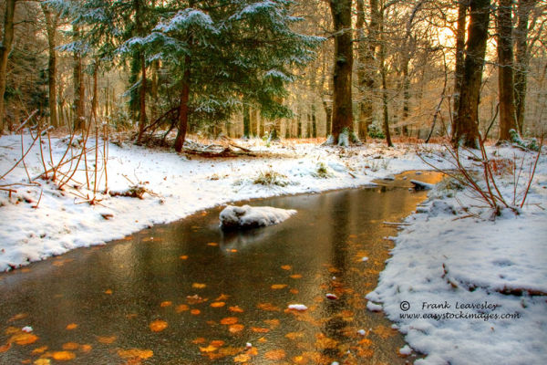 Winter In The New Forest