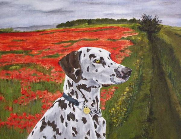 Dalmation in the Poppy Field