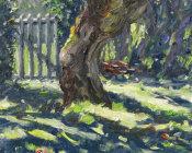 Apple Tree Shadows