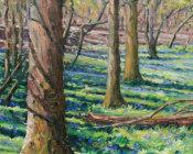 Bluebells & tree shadows,Rolvenden