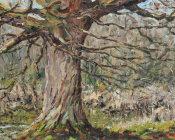 Winter oak,Sissinghurst Lake