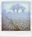 Frozen Walk