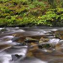 Afon Gwynant