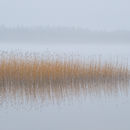 Reedflection