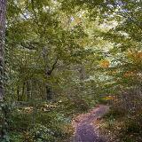 East Blean Wood