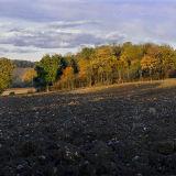 Autumn Copse