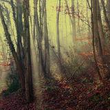 Light through mist