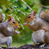 Squirrels eating web copy