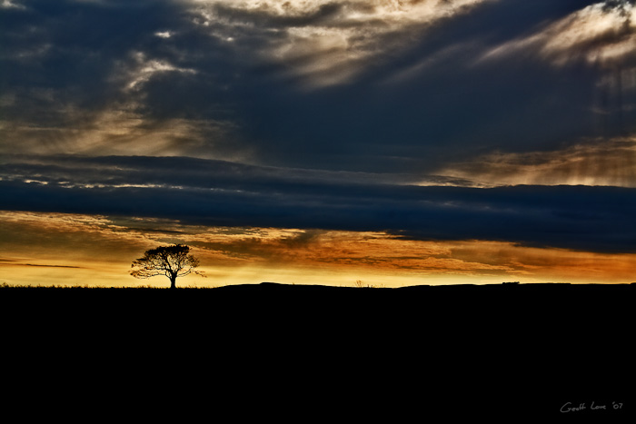 Lone tree storm