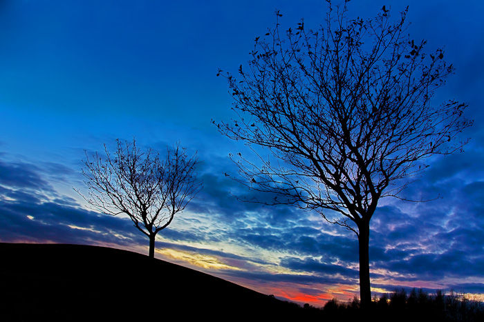 Two Tree Sunset