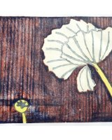 Poppies, 23 x 28.5 cms, 2014, edition of 6