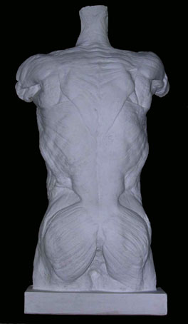 A007Spellato maschile-schiena